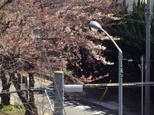 桜の季節になりました。-004